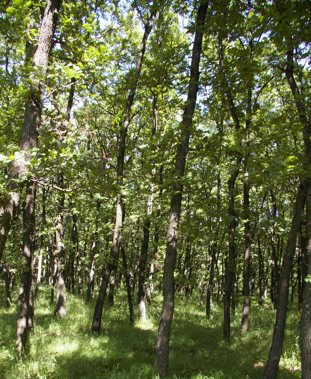 19 999 Sqm Forest Plot In Bulgaria For Log Cabin Etc Bulgarian Property House